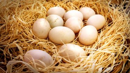 Closeup Fresh Duck's Eggs in Haystack Basket in the Farm