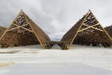 Wooden racks for drying skrei-codfish into stockfish. Laukvik-Vagan kommune-Austvagoya-Lofoten-Norway. 0642