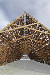 Wooden racks for drying skrei-codfish into stockfish. Laukvik-Vagan kommune-Austvagoya-Lofoten-Norway. 0648