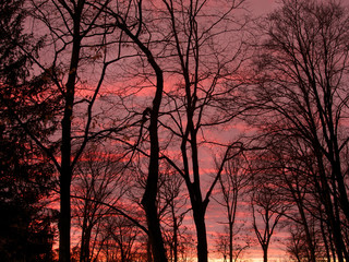pink sunset with silhouetted trees