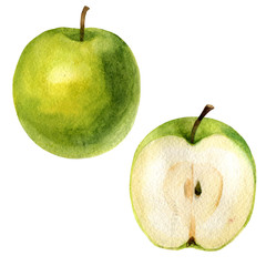 Watercolor illustration. An image of an apple and a half of an apple.