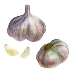 Watercolor illustration. Image of garlic from different sides, cloves of garlic.