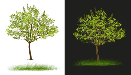 Two tree design isolate white and dark gray has clipping paths
