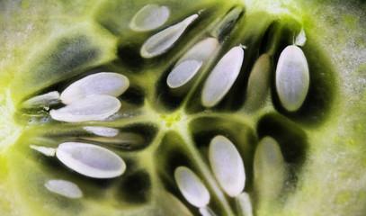 Gurkenkerne im Detail