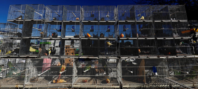 Birds for sale are seen at a market in Azeitao