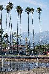 Palm Trees in Santa Barbar