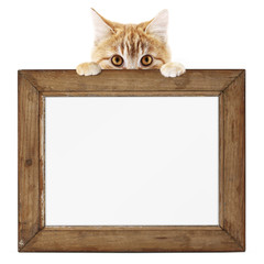funny pet cat showing a wooden picture frame isolated on white background blank template and copy space