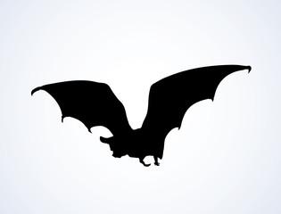 Bat. Vector drawing