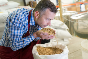quality control manager smelling the grains from the sack