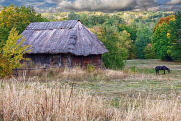 Horse grazes on background of the old house Ukrainian peasant. Animals