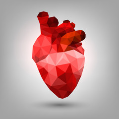 Polygonal human heart