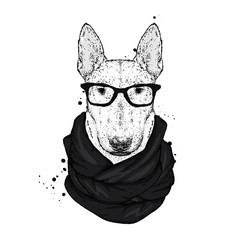 Bullterrier in a stylish hat, scarf and glasses. A pedigree dog in clothes and accessories. Fashion & Style. Vector illustration.
