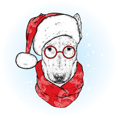 A beautiful bull terrier with a santa hat and a winter scarf. New Year's and Christmas. Pedigree dog.