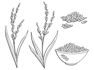 Rice plant graphic black white isolated sketch illustration vector