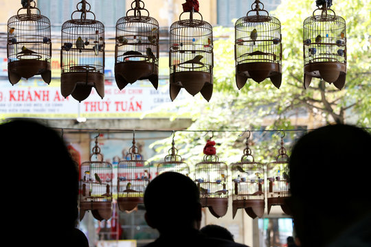 White-eye bird owners listen to bird song at a cafe in Hanoi