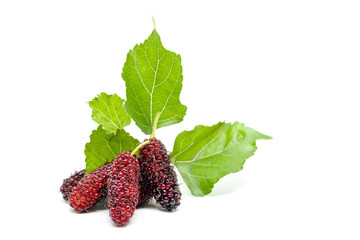 Fresh Mulberry with green leaves isolated on a white background.