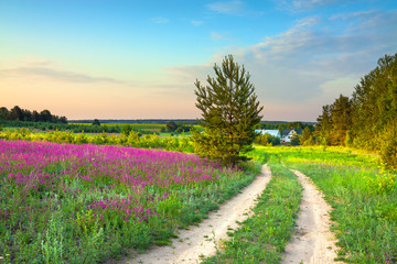 summer rural landscape with a blossoming meadow, road and a farm