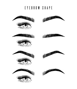 Eyebrow shaping for women face makeup. Eyebrows shape set vector illustration. arious types of eyebrows. Classic type and other. Illustration with different thickness of brows. Makeup tips.