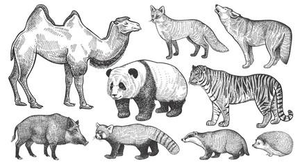 Realistic animals set.