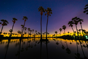 Silhouette of Twin Sugar Palm Tree on Night Sky with Stars before Sunrise. Reflection on the water.