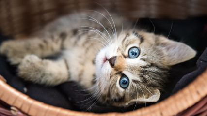 kleine Katze kuschelt im Körbchen Fototapete