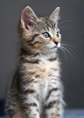 Portrait von einem kleinen Kätzchen