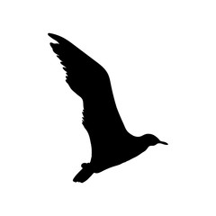 Flying Seagull Bird black silhouette isolated on white background. Vector illustration