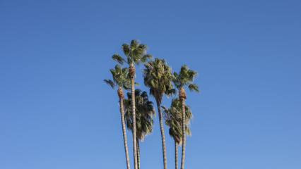 Palm Trees and Clean Blue Sky Background