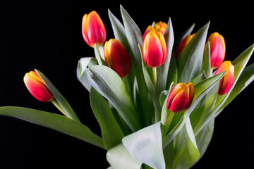 bouquet of red-yellow tulips