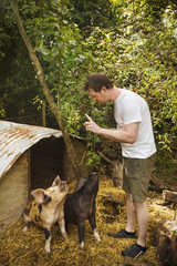 Two pigs outside a pigsty, man standing with a raised finger, training them to sit.