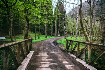 bridge though the mountain stream in the Borjomi forest