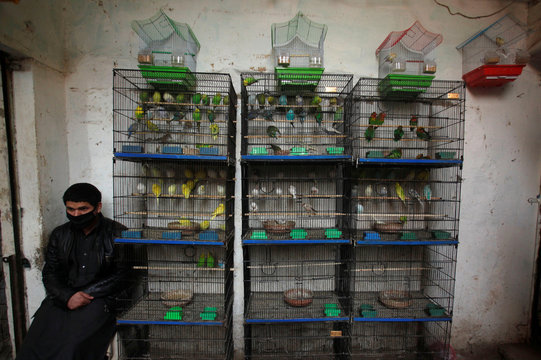 A seller sits besides birds for sale as he waits for customers at a pet shop in Peshawar, Pakistan