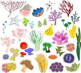 A set of different species of soft corals and marine invertebrates