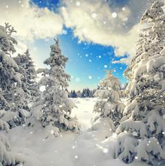 Winterwald zauberhaft