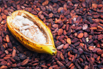 Indonesian cocoa trees plantation harvest - opened ripe pod on drying raw beans background. Fruit of cocoa plants used in food industry for producing chocolate, natural cacao butter, powder and drinks