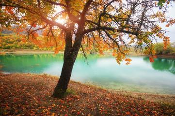 Golden autumn tree near lake. Nature composition