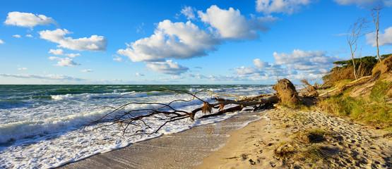 Stürmischer und sonniger Herbsttag an der Ostsee, Strand, entwurzelter Baum, Darss