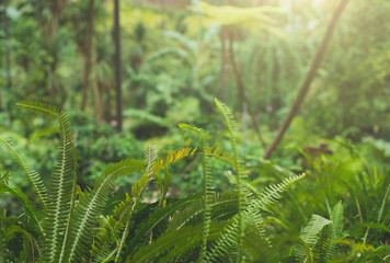 Fern in tropical forest. Suitable for background.