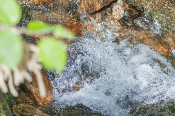 bubbling water in the forest