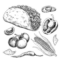 Taco drawing with vegetable. Traditional mexican food vector