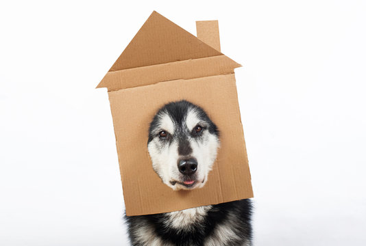 a dog with cardboard house on his head
