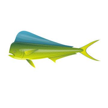 Sea fish. Beautiful, colorful ocean fish Dorado Mahi-Mahi.
