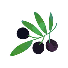 Decorative branch with black ripe olives and green foliage. Natural and healthy food concept. Isolated flat vector design element for book illustration, agriculture company logo or oil label