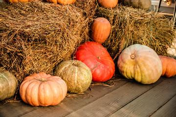 Осенний урожай, декор для праздника хэллоуин
