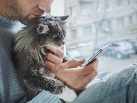 Young man sits on the windowsill, holds a beautiful, fluffy kitten on his lap and reads news on his mobile phone