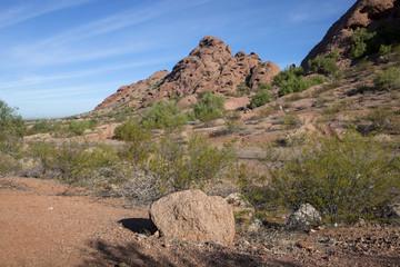 The vibrant desert landscape in Arizona