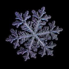 Snowflake isolated on black background. Macro photo of real snow crystal: big stellar dendrite with long arms, many side branches, complex ornate shape, elegant structure and fine hexagonal symmetry.