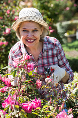 portrait of a lovely  senior woman taking care of roses in the garden