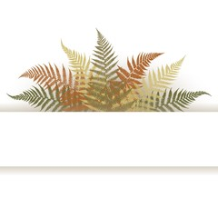 Frame decorated with fern leaves. Vector illustration. Ferns are depicted in detail with small details.