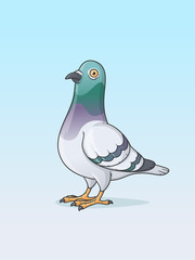 Pigeon bird cartoon vector illustration